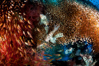 Underwater, Red Sea, Eilat, Israel